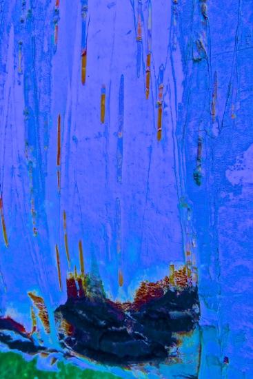D6147409'-L'Arche de Noé