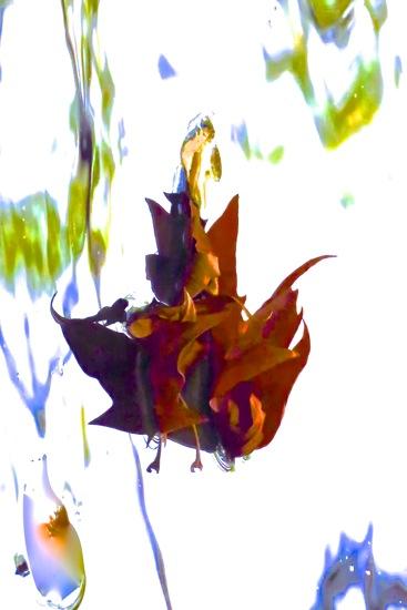 D9293637-Derviche