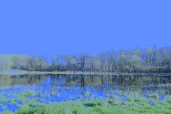 E4054056-Au reflet du bois cendré...