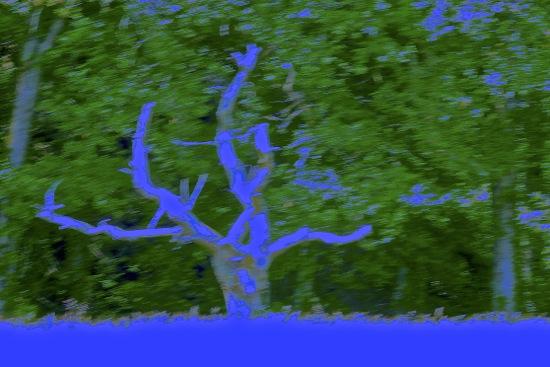 E5108299'-Sur un arbre