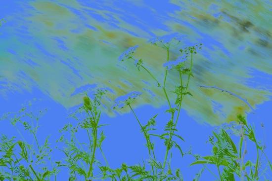 E6284094-Un peu fleur bleue !