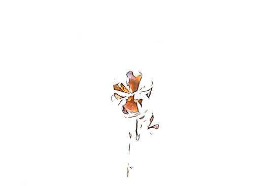 EC315479-Trèfle à quatre feuilles !