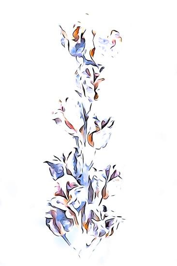 EC315600-Fleur d'hiver 1