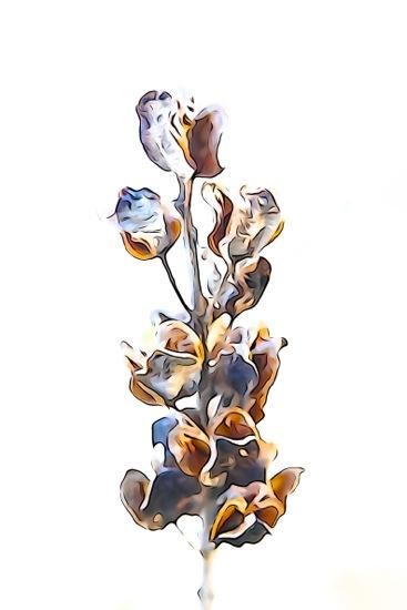 EC315626-Fleur d'hiver 2