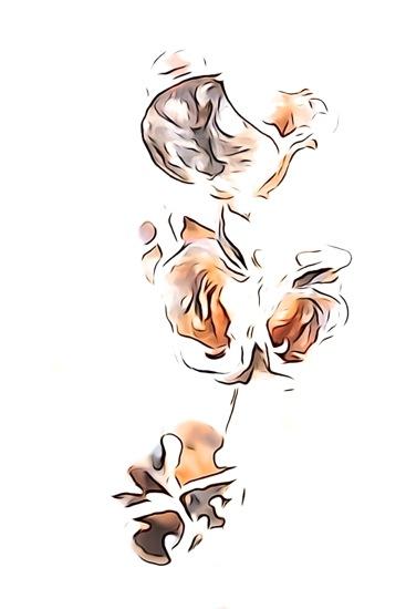 EC315645-Fleur d'hiver 4