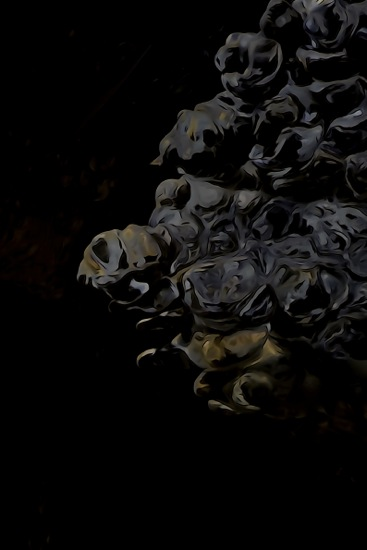 F1249071-Les aigles royaux