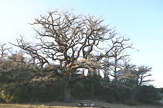 F1259750-Au pied de mon arbre...