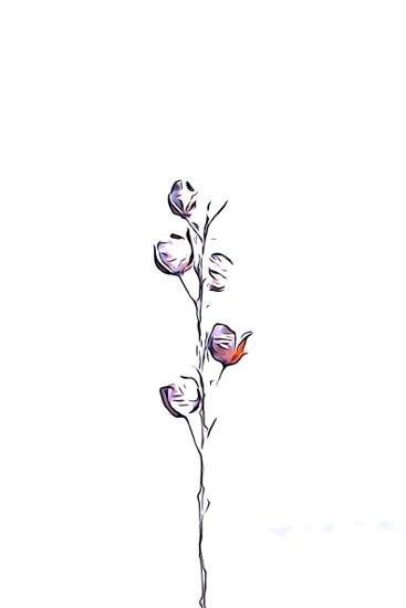 F2243148-Fleur d'hiver