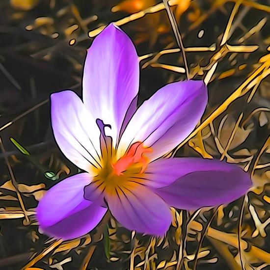 F2243176-Fleur de printemps
