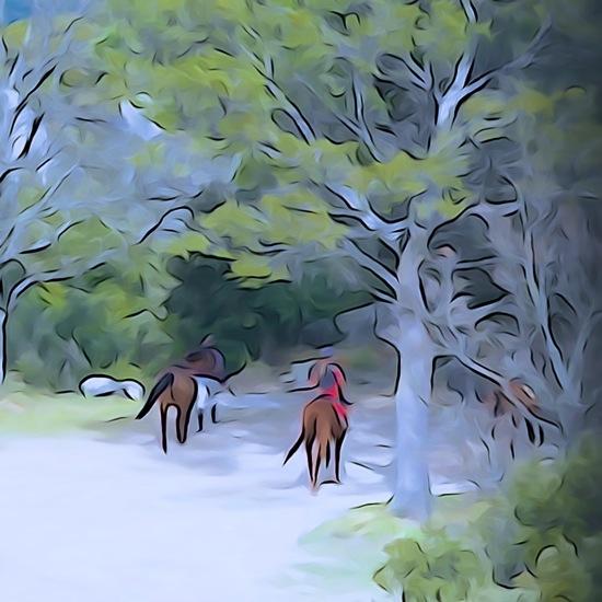 F3104737-Cavalière en forêt