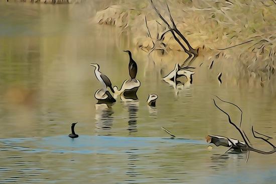 F3296334-Aquarelle à l'étang