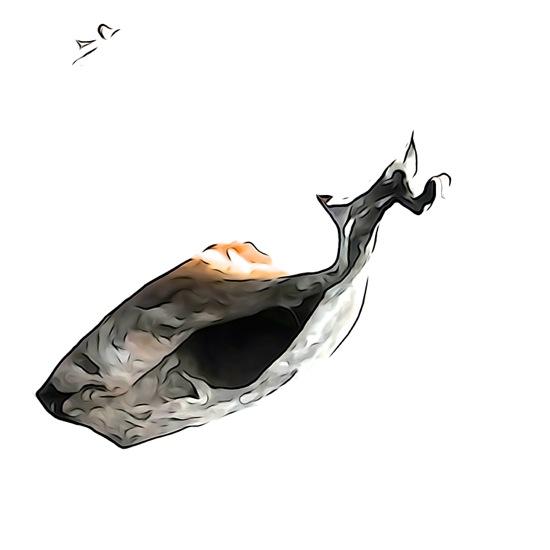 F5219778-Baleine en apnée