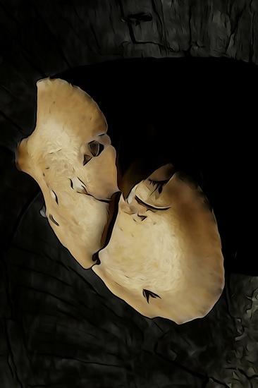 F5229871-Le baiser