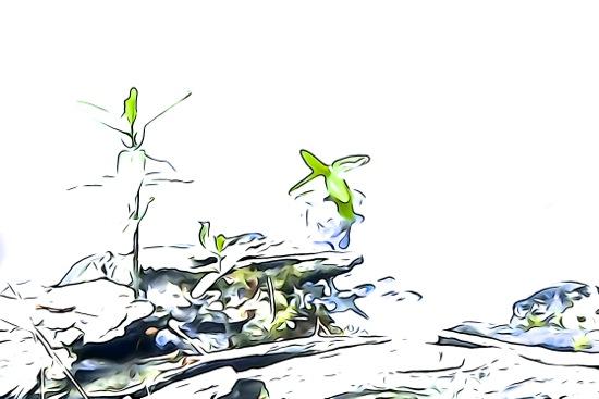 F5230376-Biodiversité...