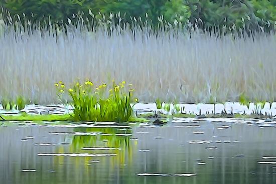 F5240585-Aquarelle sur l'étang