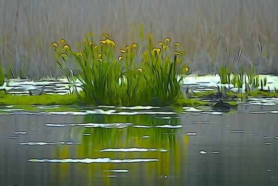 F5240586-Aquarelle sur l'étang