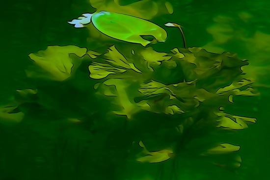 F5301228-Algues en famille !