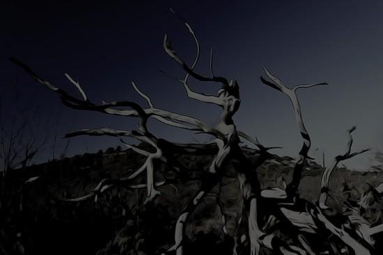 Fc226519-Les arbres fantômes