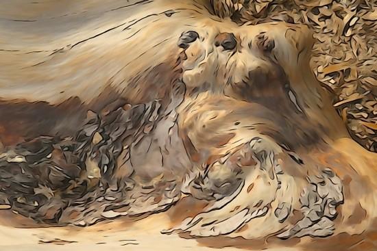 G1259457-Lassie, chien fidèle...
