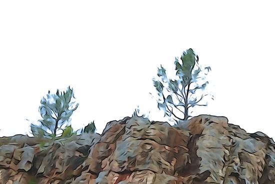 G3041525-Arbre de colline