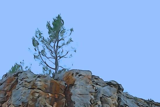 G3041529-Arbre de colline