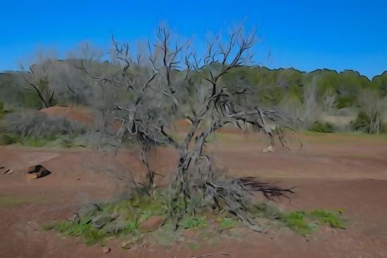 G3111833-L'arbre de la savane