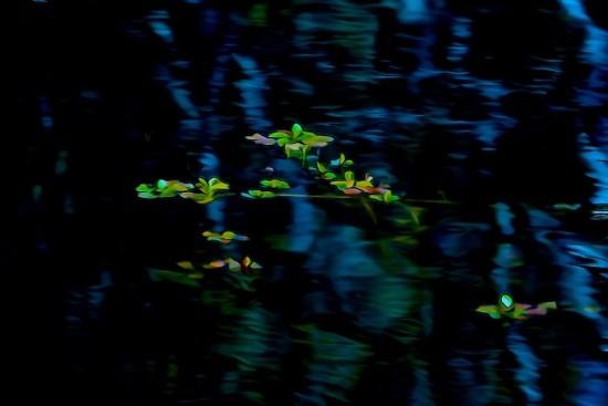 G3112015-A fleur d'eau...