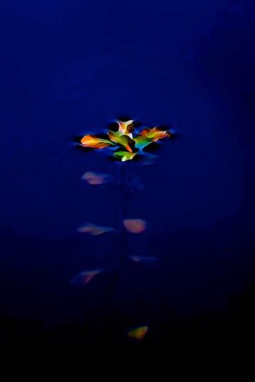 G3112141-Papillon d'eau