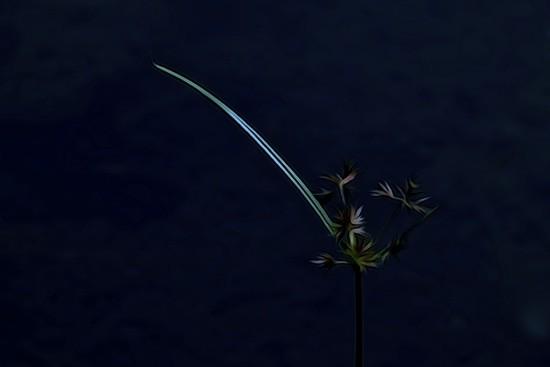 G5204237-Lueur d'espoir
