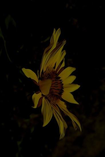G7040094-Soleil de minuit