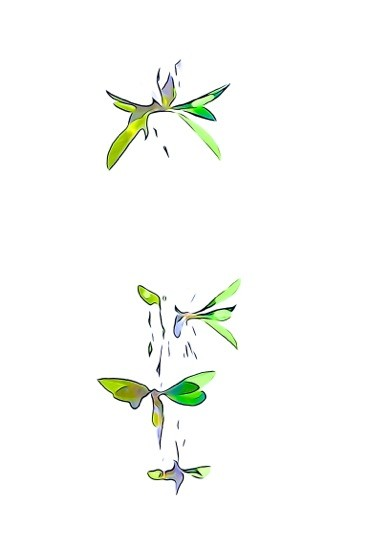 G7150726-Papillons volent