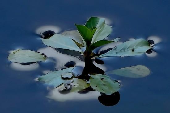 G7150818-A fleur d'eau...
