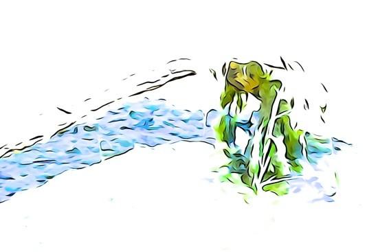 G7171165-Désespérance de la grenouille