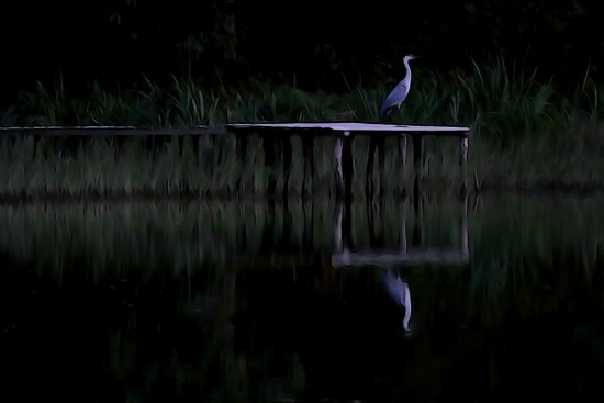 G9070490-Nocturne