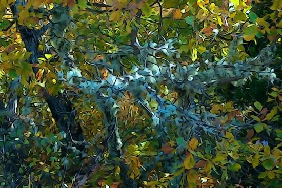 Ga244215-Lichen d'automne