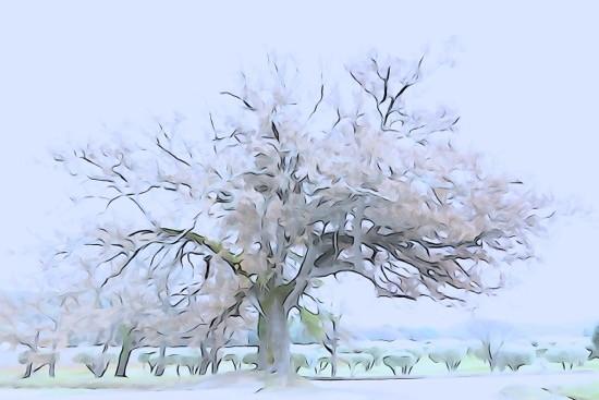 H1168928-Le printemps en hiver