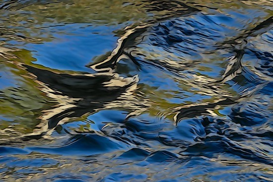H1289695-L'aigle noir