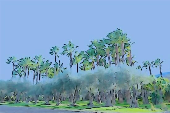H1289892--La palmeraie