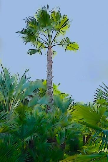 H1289901--La palmeraie
