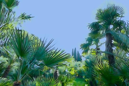 H1289908--La palmeraie