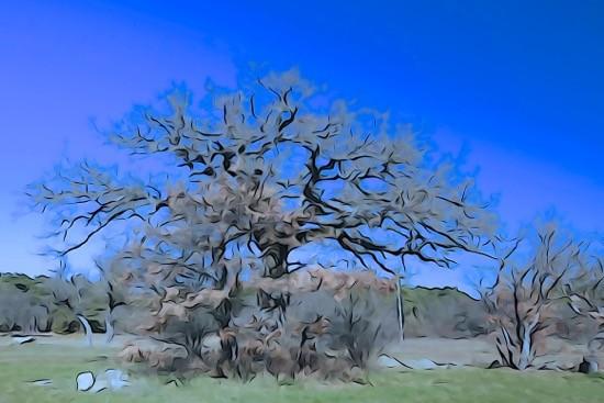 H2200843-L'arbre de l'énergie