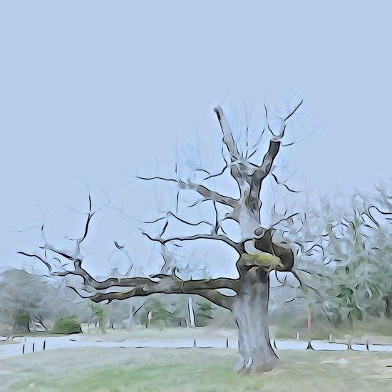 H3262215-Le vieux chêne
