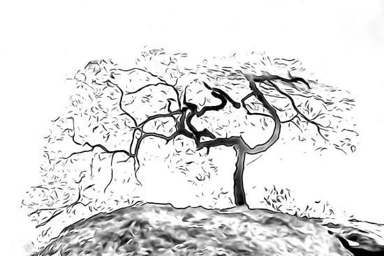 H5284207-Dessine-moi un arbre...