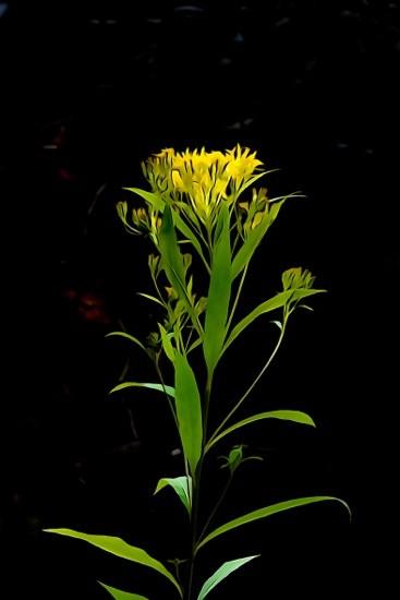 H8127072-Fleur en fleur