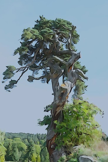 Ha020240-Danse de l'arbre