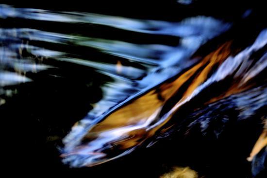 48129596-Bois magnétique